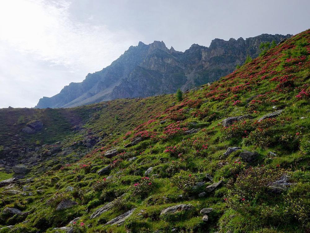 Wanderroute Makernispitze-wanderurlaub, wandern, nationalpark hohe tauern, kärnten, osttirol, österreich – Natur aktiv Hotel Tauernstern