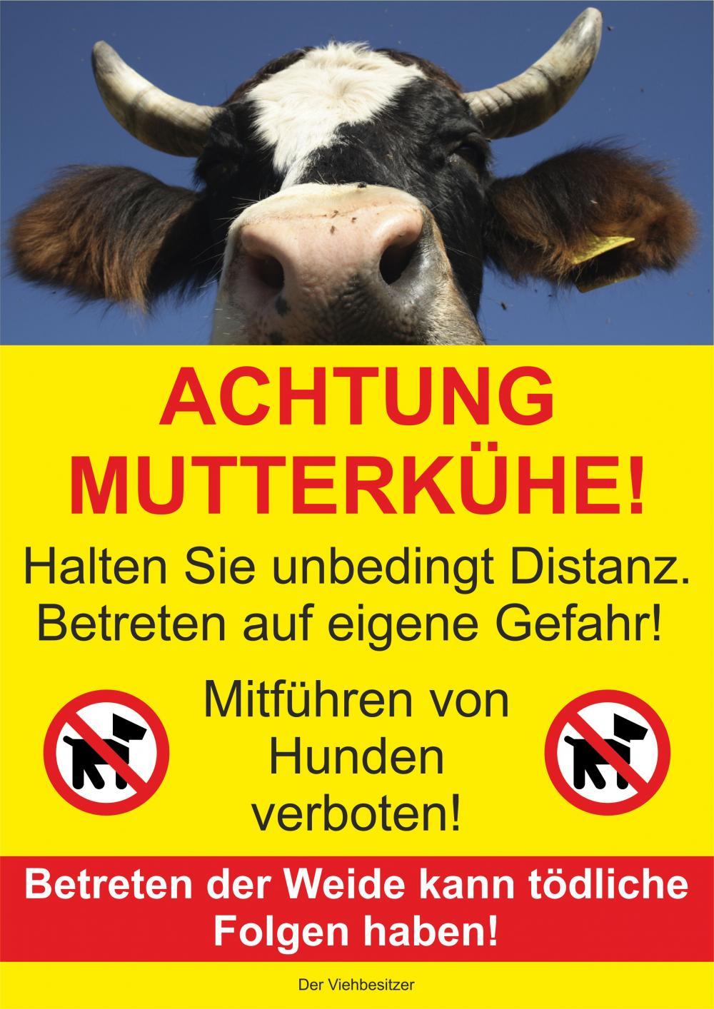 Achtung Mutterkühe!