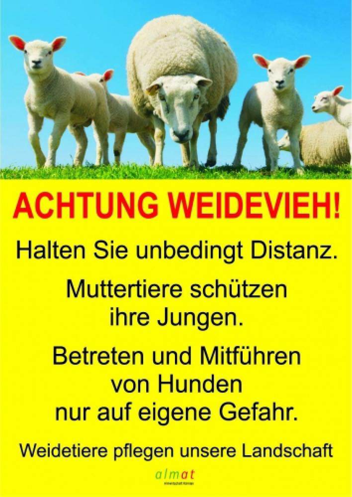 Achtung Weidevieh - Schaf